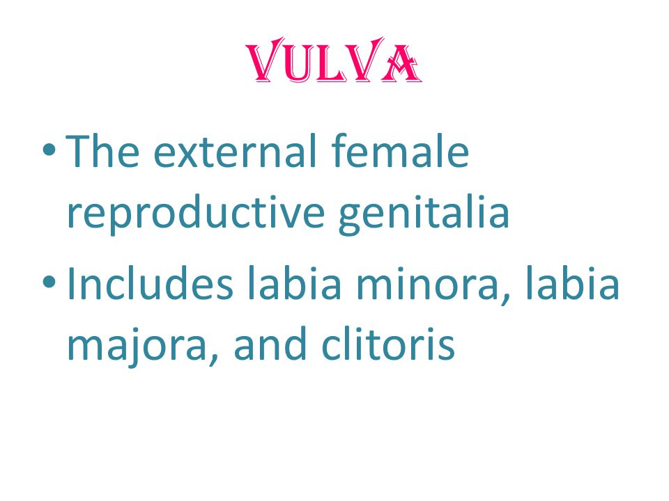 Vulva The external female reproductive genitalia Includes labia minora, labia majora, and clitoris