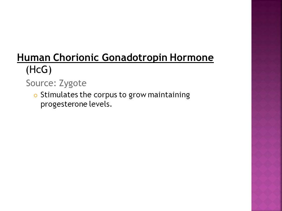 Human Chorionic Gonadotropin Hormone (HcG) Source: Zygote Stimulates the corpus to grow maintaining progesterone levels.