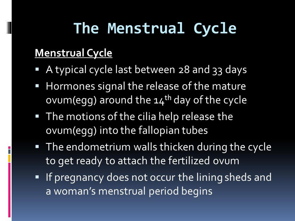 The Menstrual Cycle Menstrual Cycle  A typical cycle last between 28 and 33 days  Hormones signal the release of the mature ovum(egg) around the 14 th day of the cycle  The motions of the cilia help release the ovum(egg) into the fallopian tubes  The endometrium walls thicken during the cycle to get ready to attach the fertilized ovum  If pregnancy does not occur the lining sheds and a woman's menstrual period begins