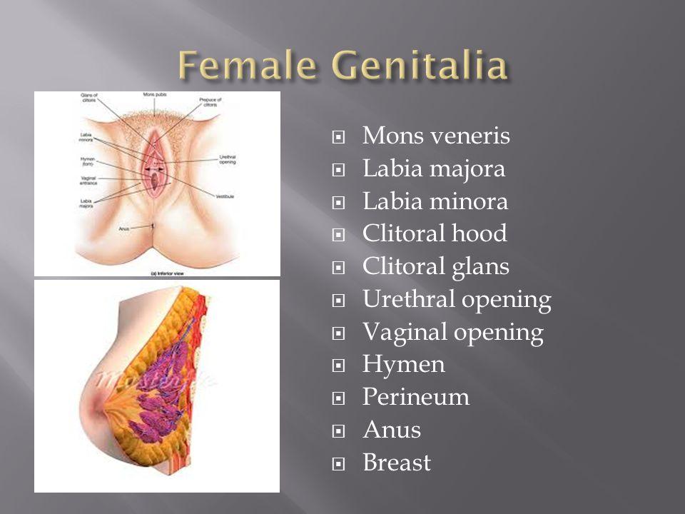  Mons veneris  Labia majora  Labia minora  Clitoral hood  Clitoral glans  Urethral opening  Vaginal opening  Hymen  Perineum  Anus  Breast