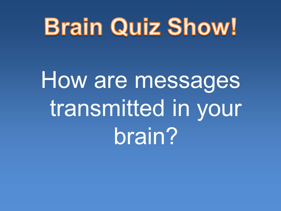 How are messages transmitted in your brain