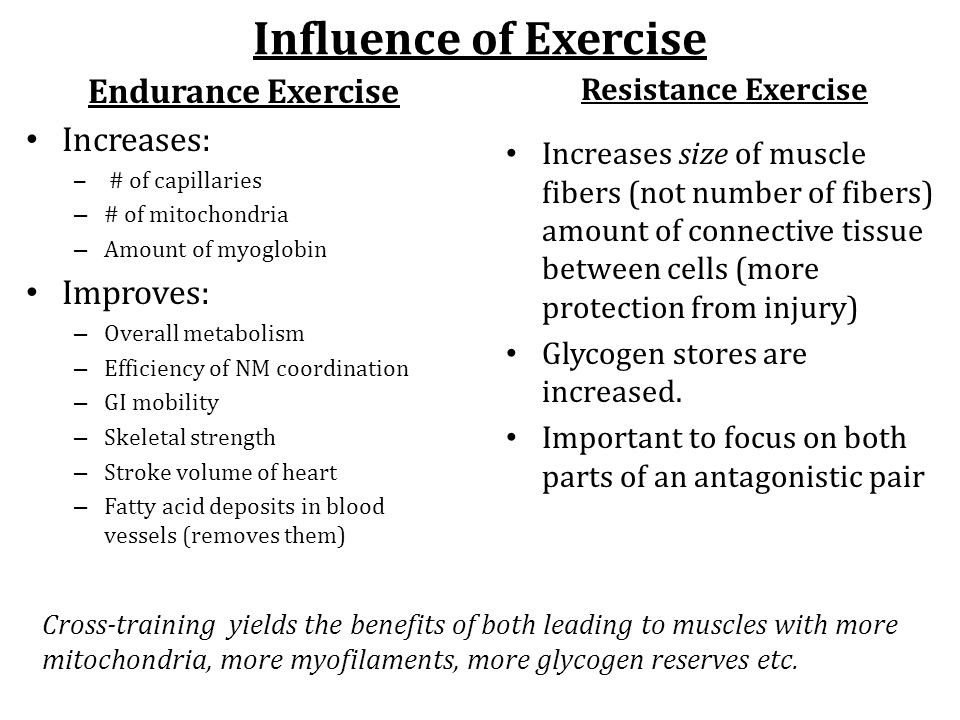 Influence of Exercise Endurance Exercise Increases: – # of capillaries – # of mitochondria – Amount of myoglobin Improves: – Overall metabolism – Effi