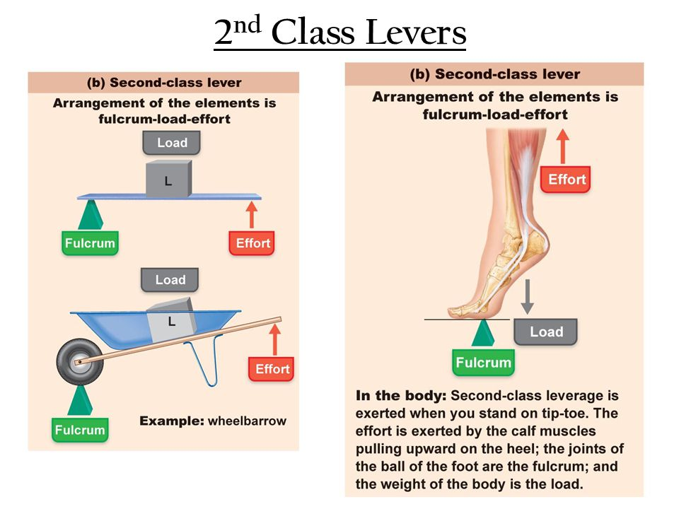 2 nd Class Levers