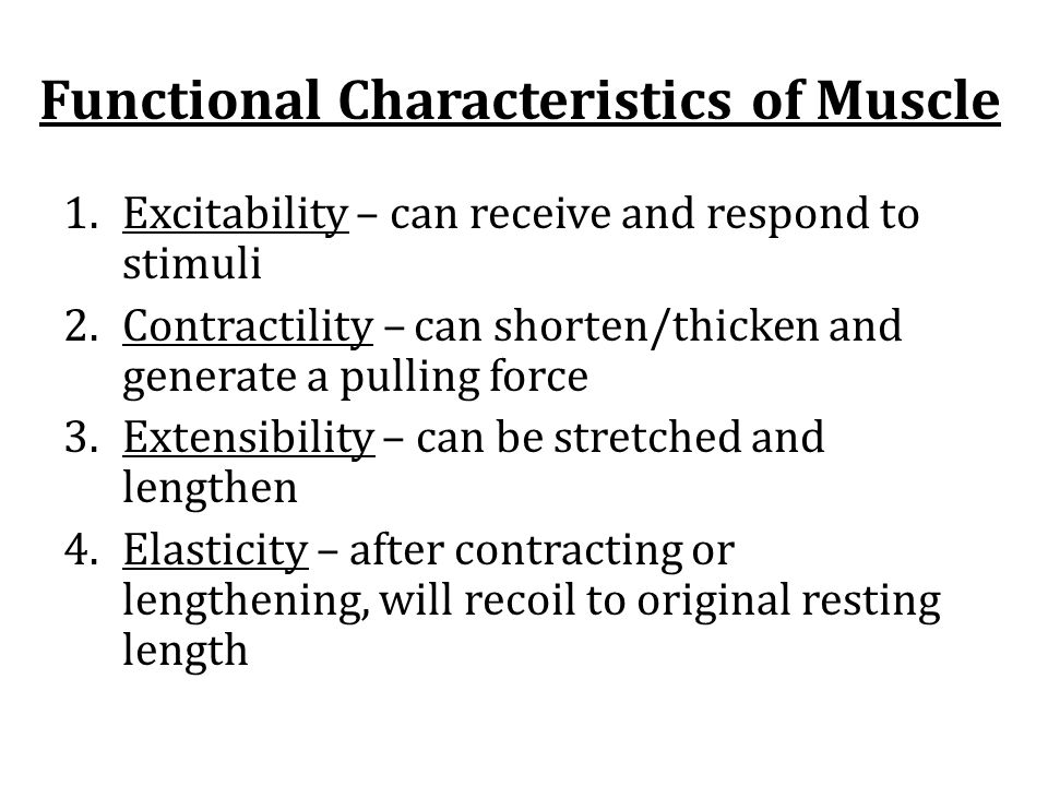 Functional Characteristics of Muscle 1.Excitability – can receive and respond to stimuli 2.Contractility – can shorten/thicken and generate a pulling