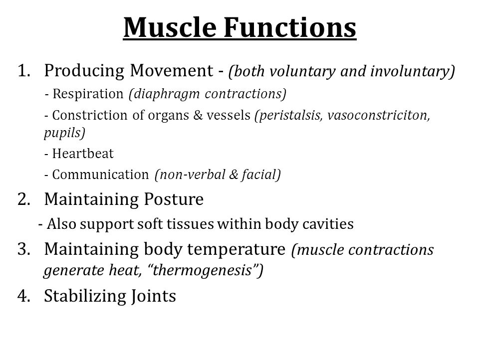 Muscle Functions 1.Producing Movement - (both voluntary and involuntary) - Respiration (diaphragm contractions) - Constriction of organs & vessels (pe