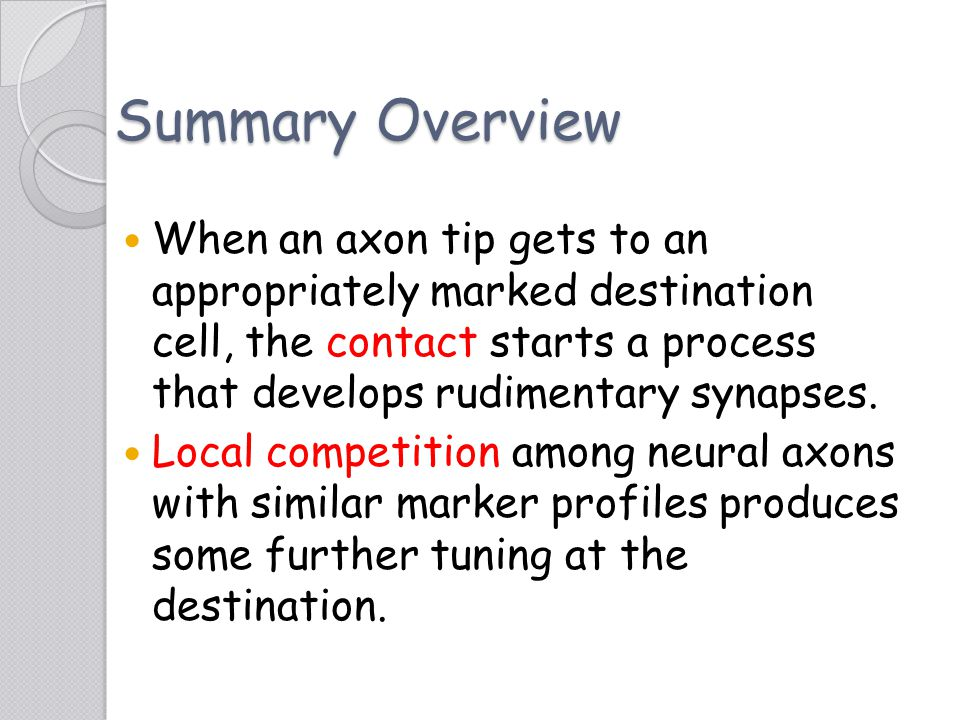 Summary Overview When an axon tip gets to an appropriately marked destination cell, the contact starts a process that develops rudimentary synapses. L