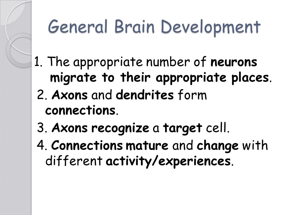 General Brain Development 1. The appropriate number of neurons migrate to their appropriate places. 2. Axons and dendrites form connections. 3. Axons