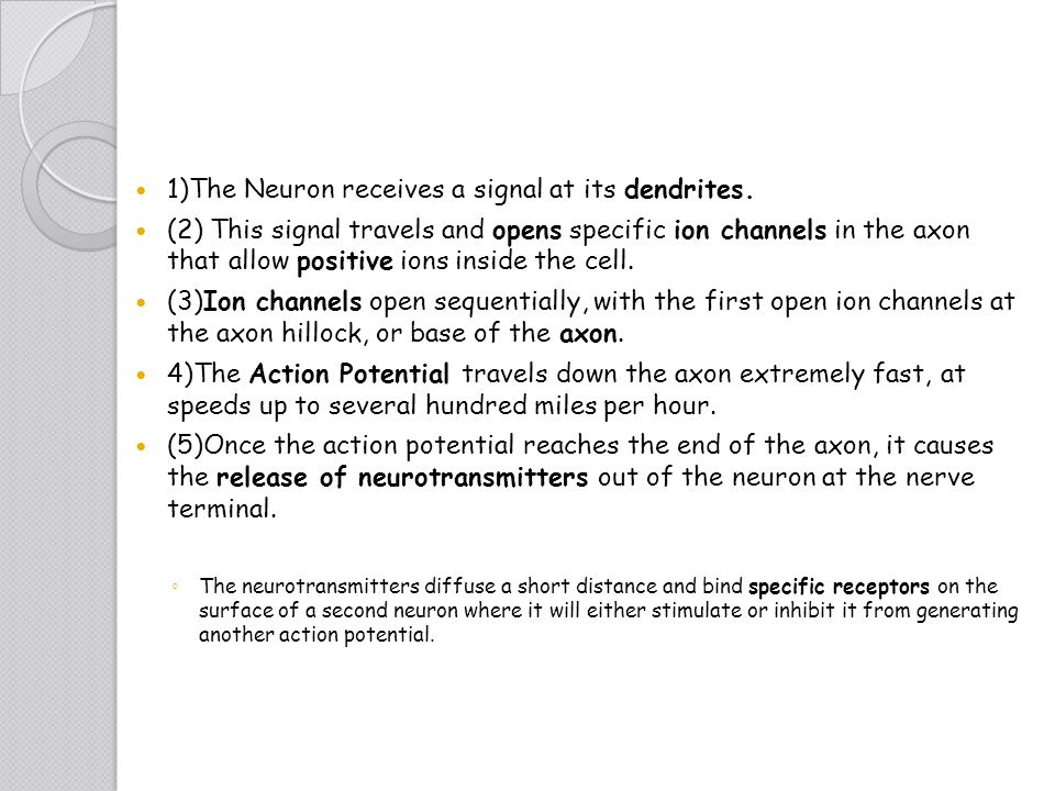 1)The Neuron receives a signal at its dendrites. (2) This signal travels and opens specific ion channels in the axon that allow positive ions inside t