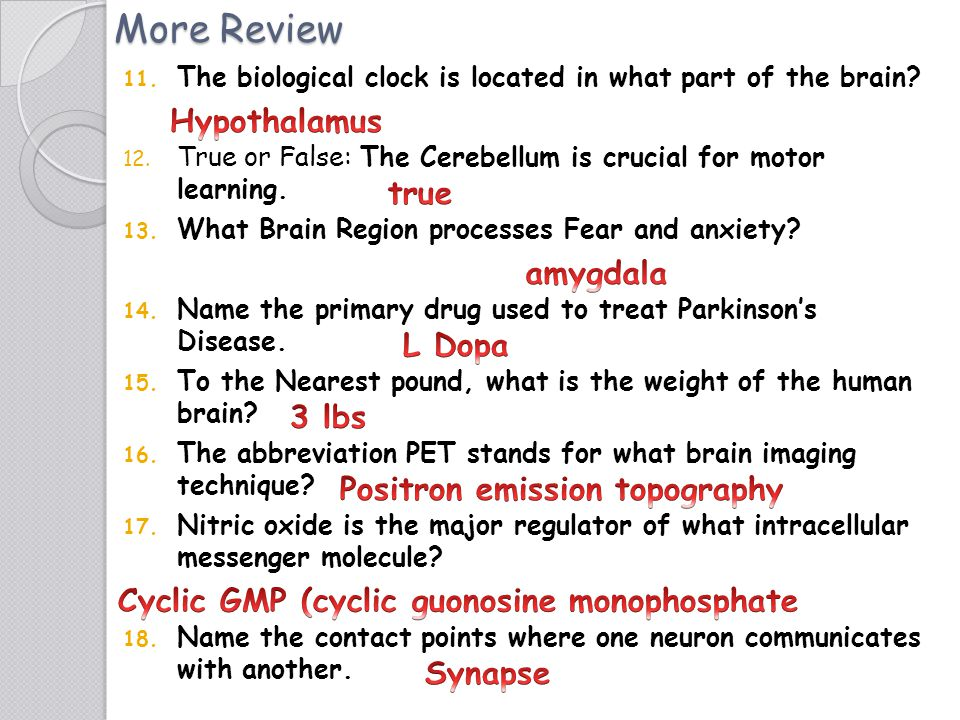 Brain Facts Page 11 1.)The Journey of Nerve Cells Origins of the Nervous System