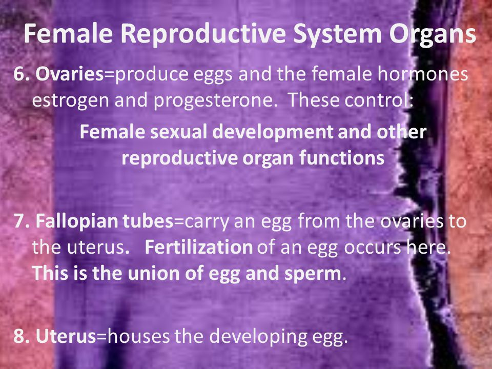 Female Reproductive System Organs 6.