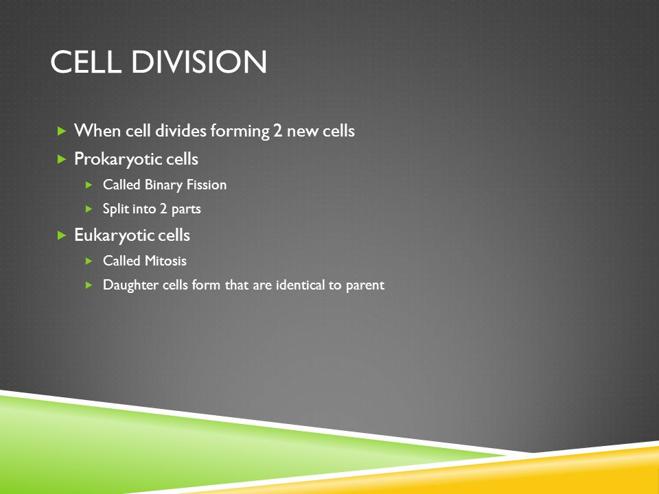  When cell divides forming 2 new cells  Prokaryotic cells  Called Binary Fission  Split into 2 parts  Eukaryotic cells  Called Mitosis  Daughter cells form that are identical to parent