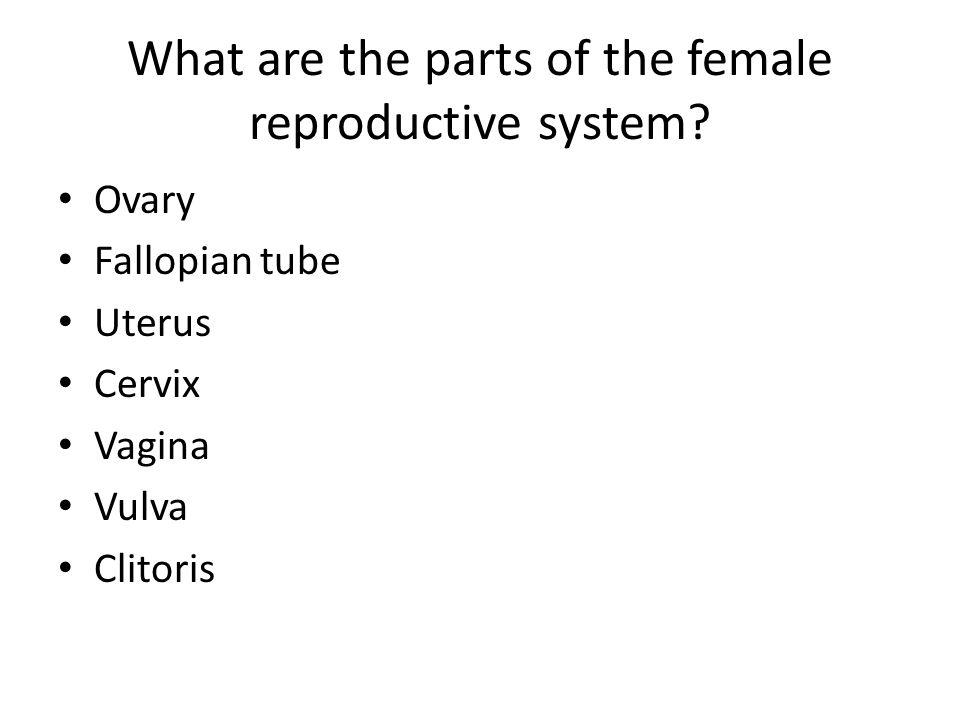 What are the parts of the female reproductive system? Ovary Fallopian tube Uterus Cervix Vagina Vulva Clitoris