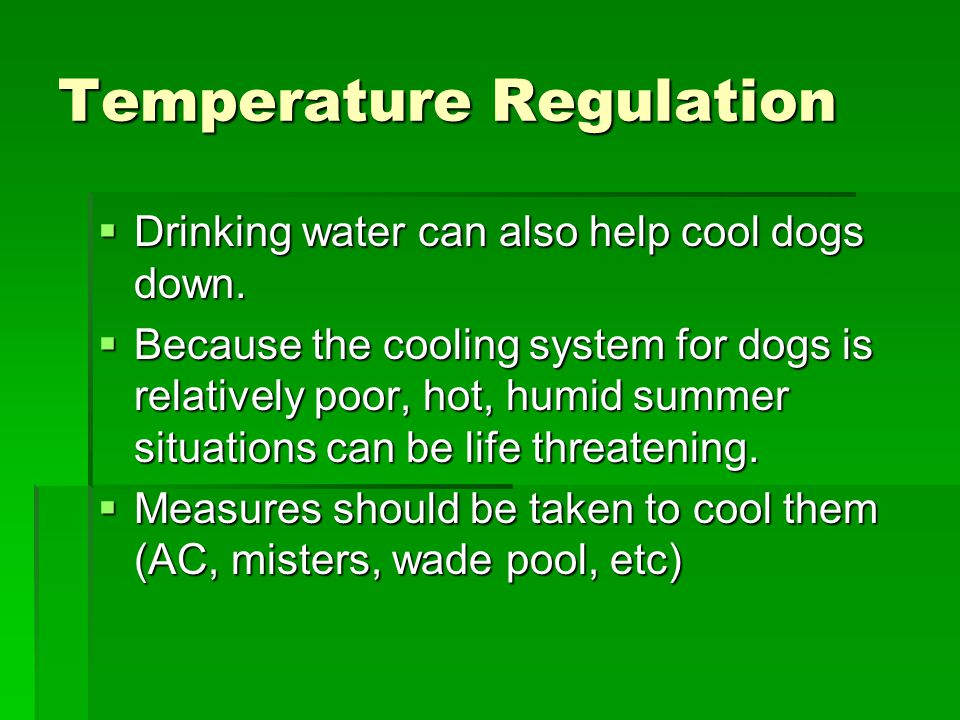 Temperature Regulation  Drinking water can also help cool dogs down.