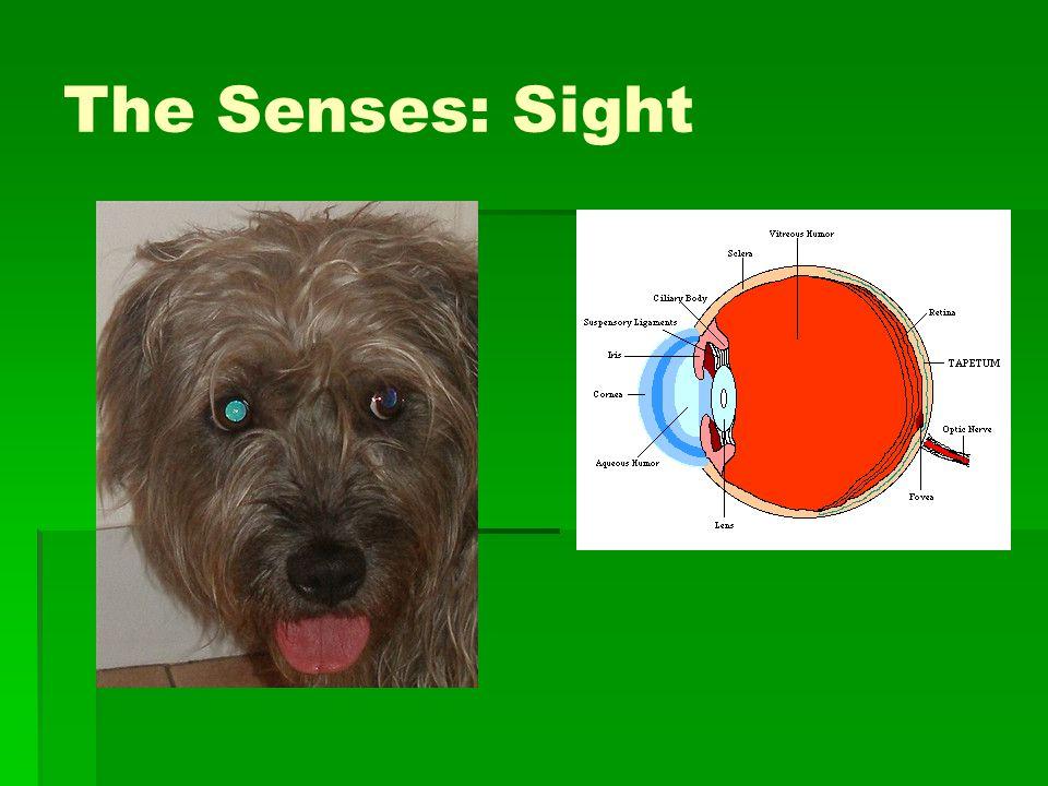 The Senses: Sight