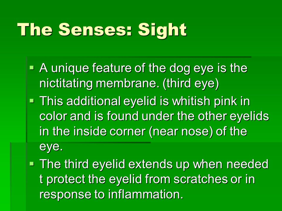 The Senses: Sight  A unique feature of the dog eye is the nictitating membrane.