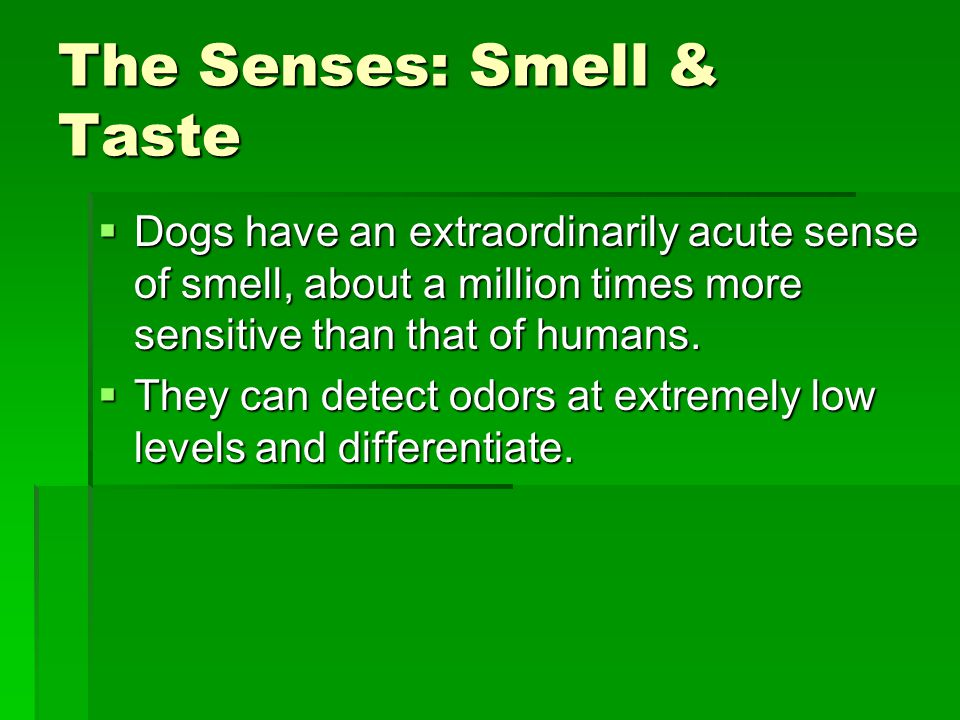 The Senses: Smell & Taste  Dogs have an extraordinarily acute sense of smell, about a million times more sensitive than that of humans.