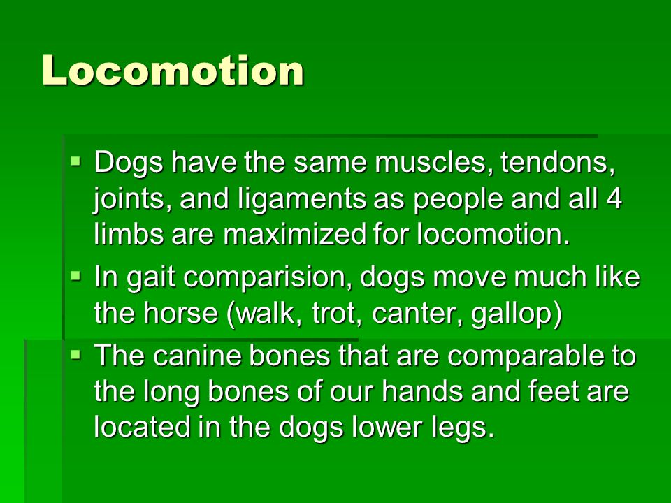 Locomotion  Dogs have the same muscles, tendons, joints, and ligaments as people and all 4 limbs are maximized for locomotion.