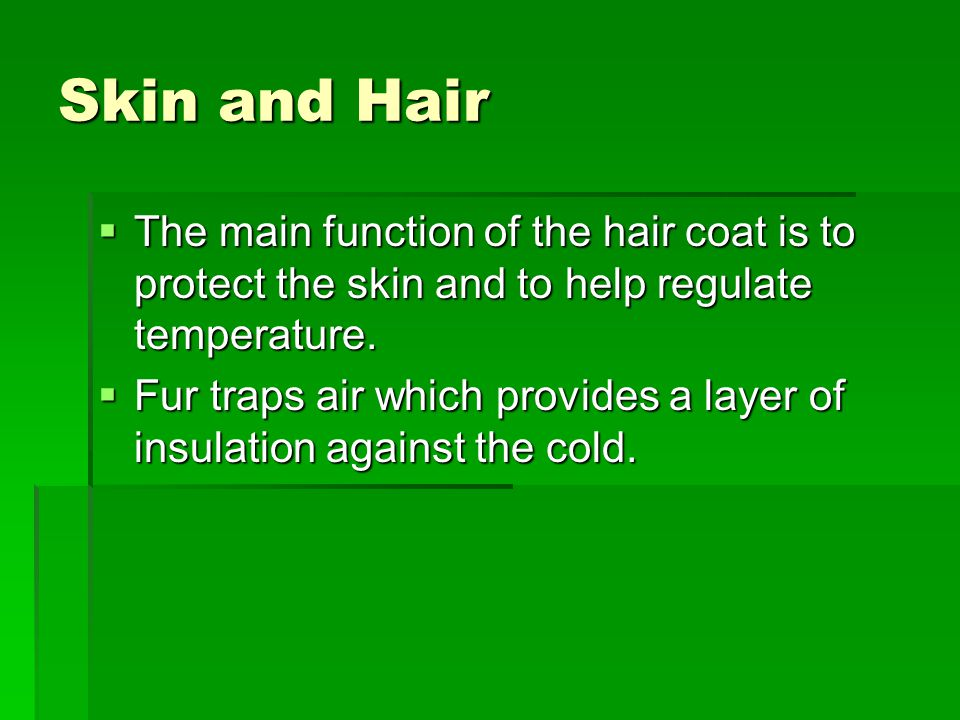 Skin and Hair  The main function of the hair coat is to protect the skin and to help regulate temperature.