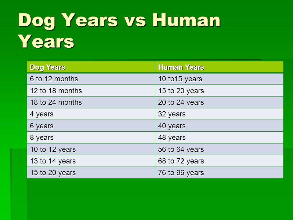 Dog Years vs Human Years Dog Years Human Years 6 to 12 months 10 to15 years 12 to 18 months 15 to 20 years 18 to 24 months 20 to 24 years 4 years 32 years 6 years 40 years 8 years 48 years 10 to 12 years 56 to 64 years 13 to 14 years 68 to 72 years 15 to 20 years 76 to 96 years