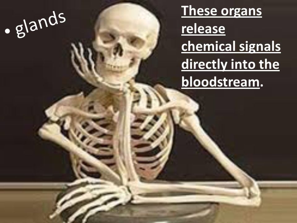 These organs release chemical signals directly into the bloodstream. glands