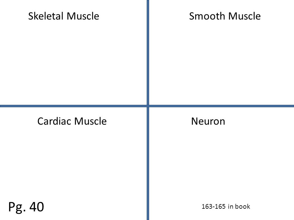 Skeletal MuscleSmooth Muscle Cardiac MuscleNeuron Pg. 40 163-165 in book