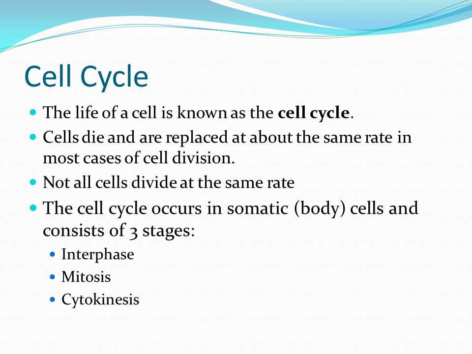Cell Cycle The life of a cell is known as the cell cycle.
