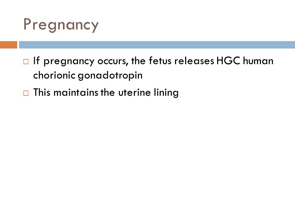 Pregnancy  If pregnancy occurs, the fetus releases HGC human chorionic gonadotropin  This maintains the uterine lining