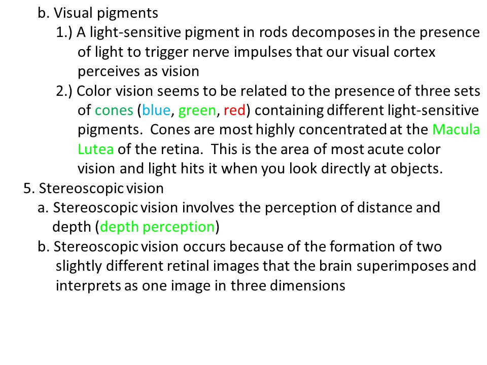 b. Visual pigments 1.) A light-sensitive pigment in rods decomposes in the presence of light to trigger nerve impulses that our visual cortex perceive