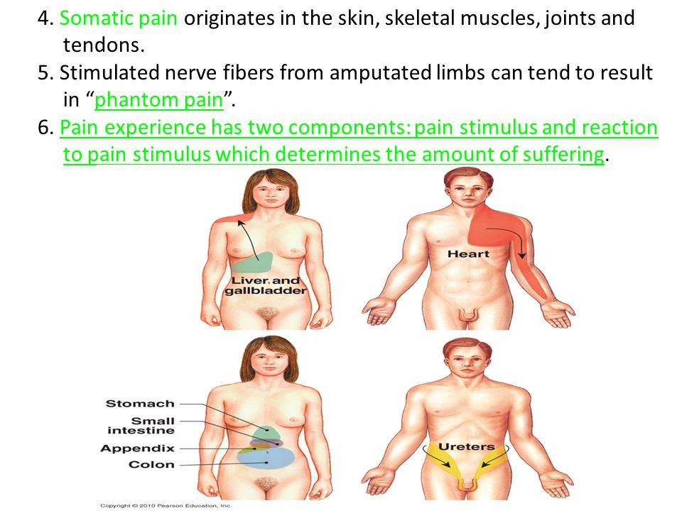 "4. Somatic pain originates in the skin, skeletal muscles, joints and tendons. 5. Stimulated nerve fibers from amputated limbs can tend to result in ""p"