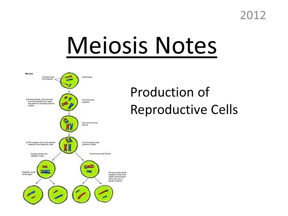 Meiosis Notes 2012 Production of Reproductive Cells