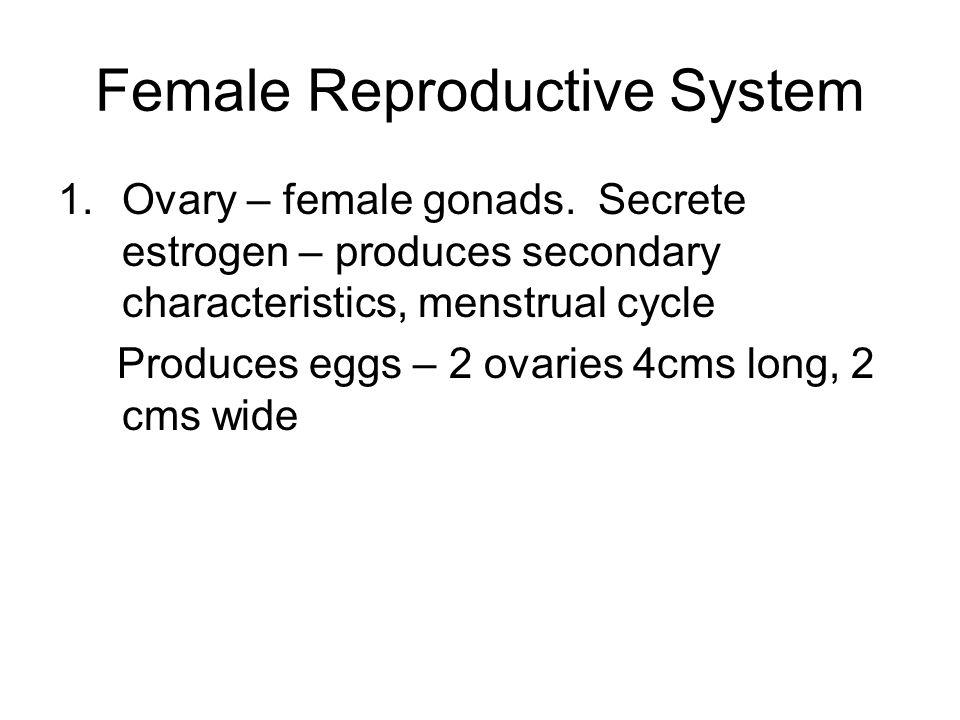 Female Reproductive System 1.Ovary – female gonads. Secrete estrogen – produces secondary characteristics, menstrual cycle Produces eggs – 2 ovaries 4