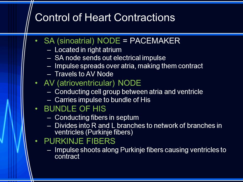 Control of Heart Contractions SA (sinoatrial) NODE = PACEMAKER –Located in right atrium –SA node sends out electrical impulse –Impulse spreads over at