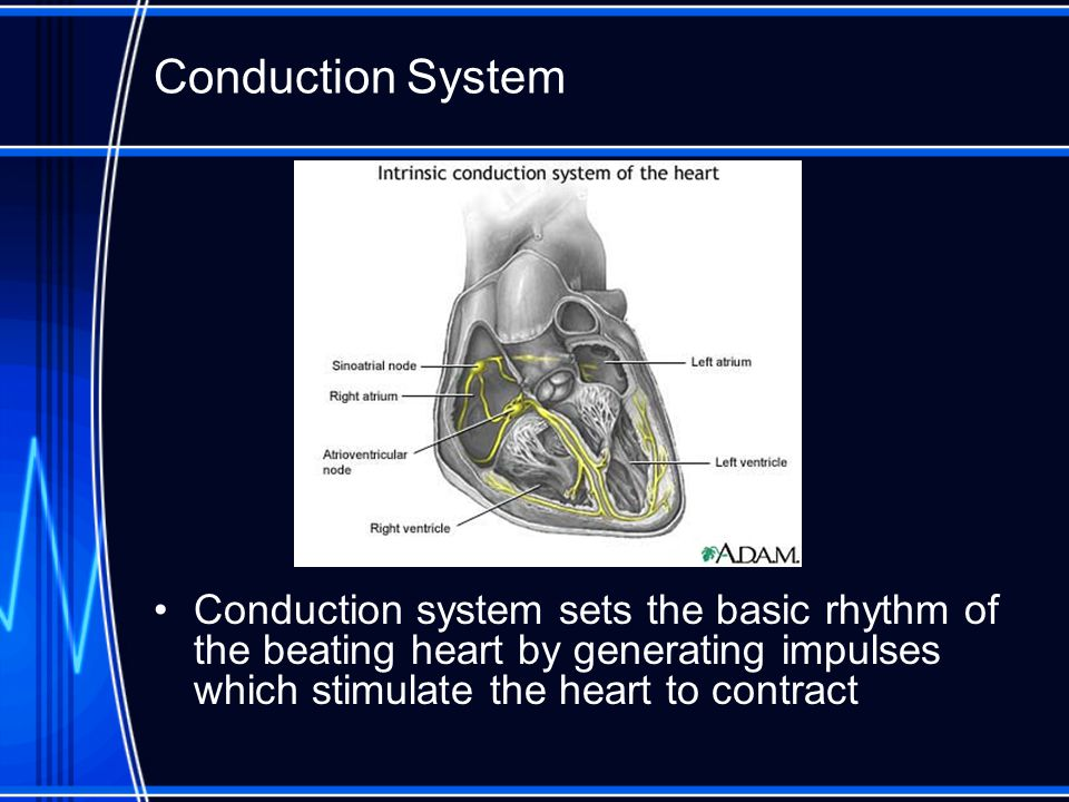 Conduction System Conduction system sets the basic rhythm of the beating heart by generating impulses which stimulate the heart to contract