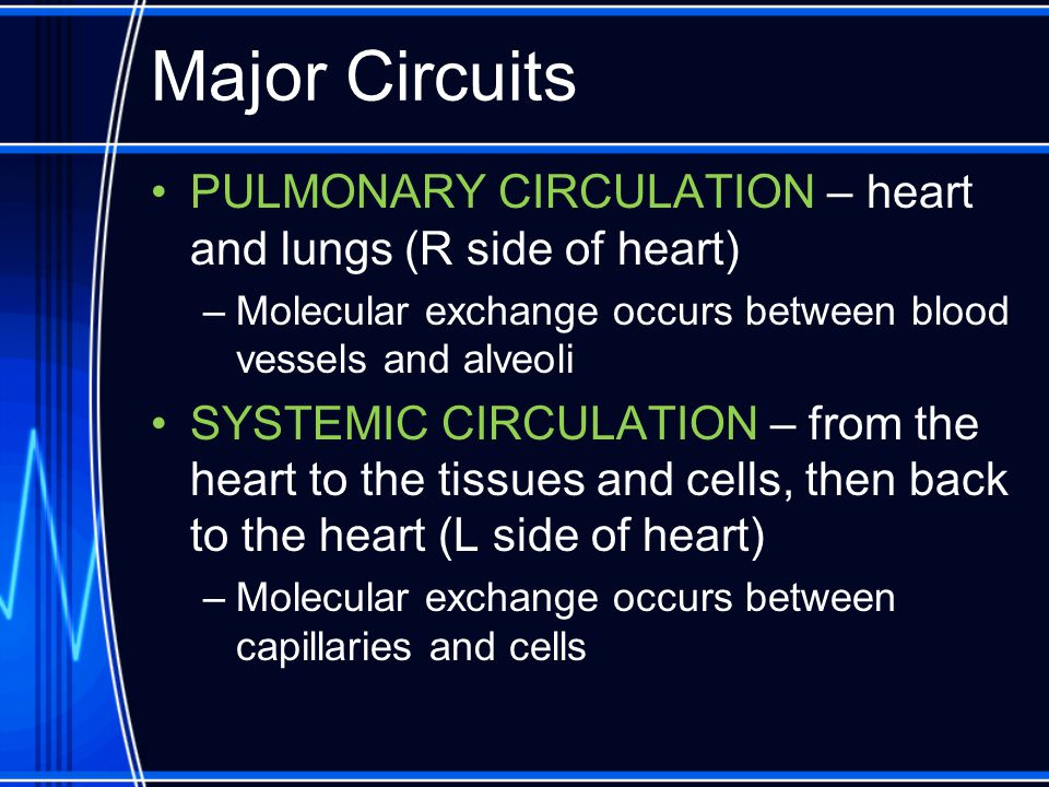 Major Circuits PULMONARY CIRCULATION – heart and lungs (R side of heart) –Molecular exchange occurs between blood vessels and alveoli SYSTEMIC CIRCULA