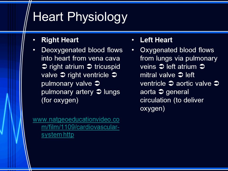 Heart Physiology Right Heart Deoxygenated blood flows into heart from vena cava  right atrium  tricuspid valve  right ventricle  pulmonary valve 