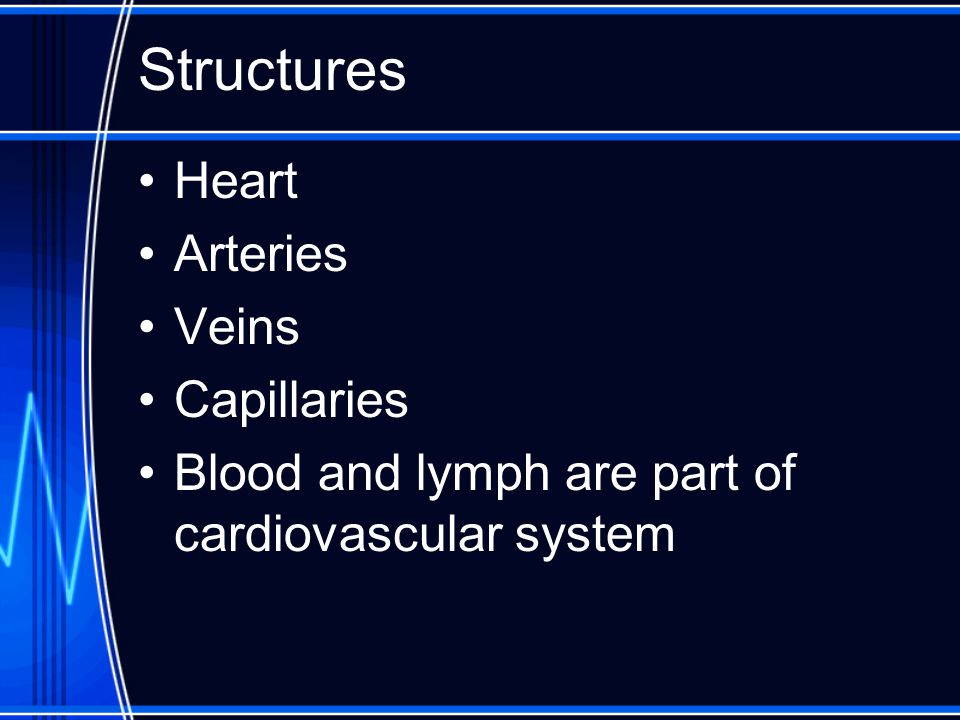 Structures Heart Arteries Veins Capillaries Blood and lymph are part of cardiovascular system