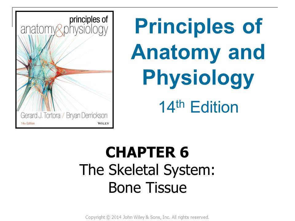 CHAPTER 6 The Skeletal System: Bone Tissue Principles of Anatomy and Physiology 14 th Edition Copyright © 2014 John Wiley & Sons, Inc.
