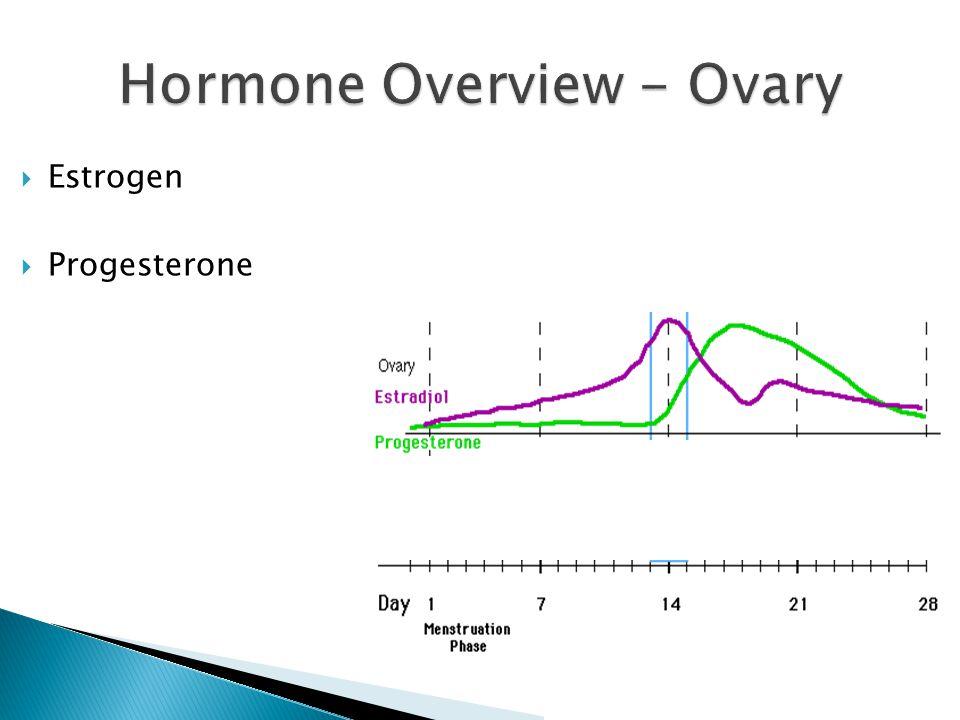  Estrogen  Progesterone