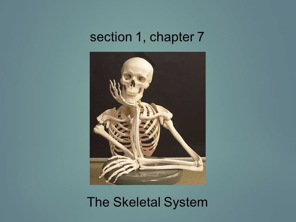 The science of bones is called osteology Functions of bone 1.Support & protect organs The brain is protected by the skull and the heart and lungs are protected the ribs & sternum 2.Movement Muscles attach to skeleton 3.Inorganic salt storage Stores calcium and phosphate 4.Blood cell production Red bone marrow forms new blood cells