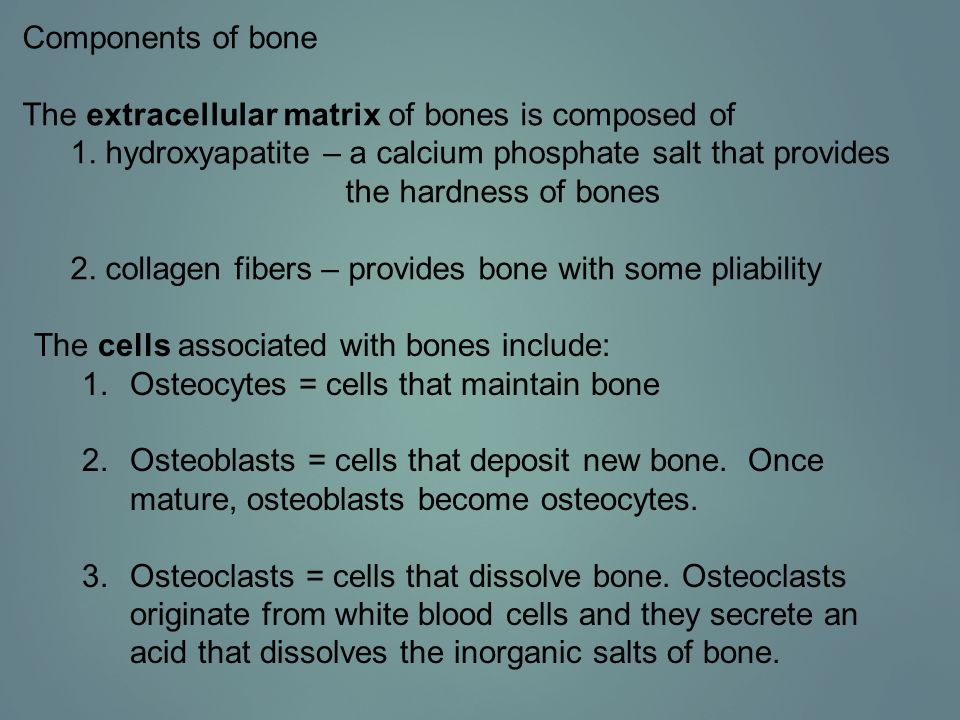 Bones may be classified by their shape.