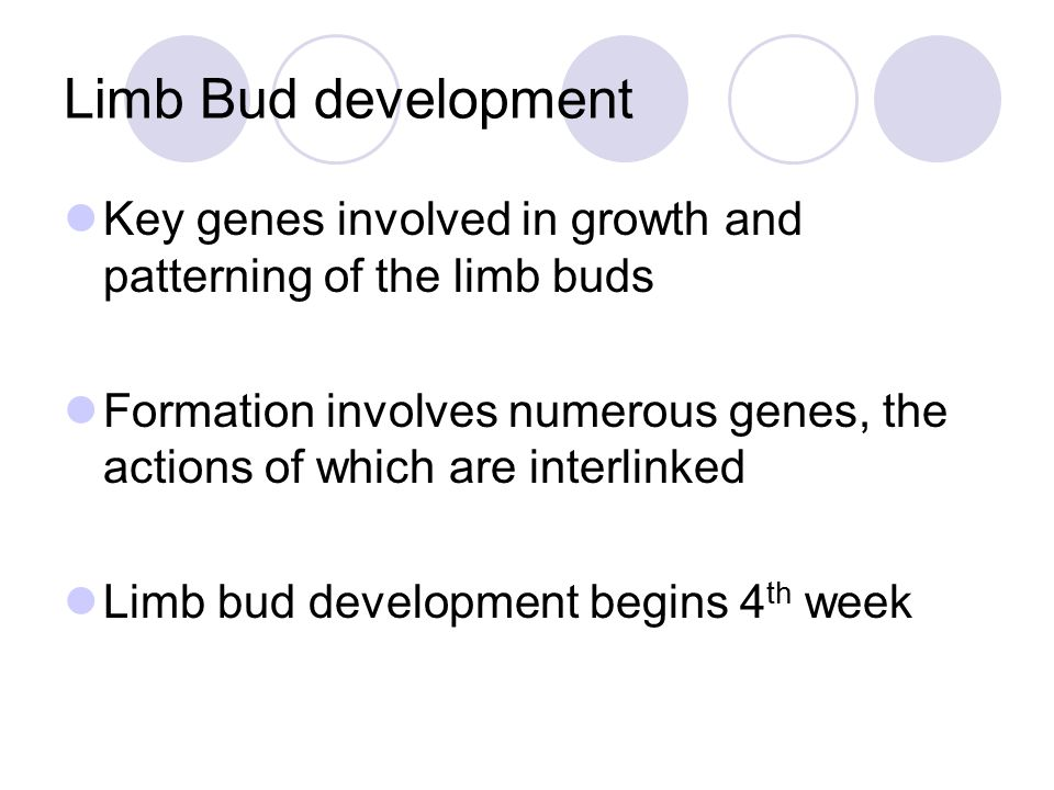 Limb Bud development Key genes involved in growth and patterning of the limb buds Formation involves numerous genes, the actions of which are interlin