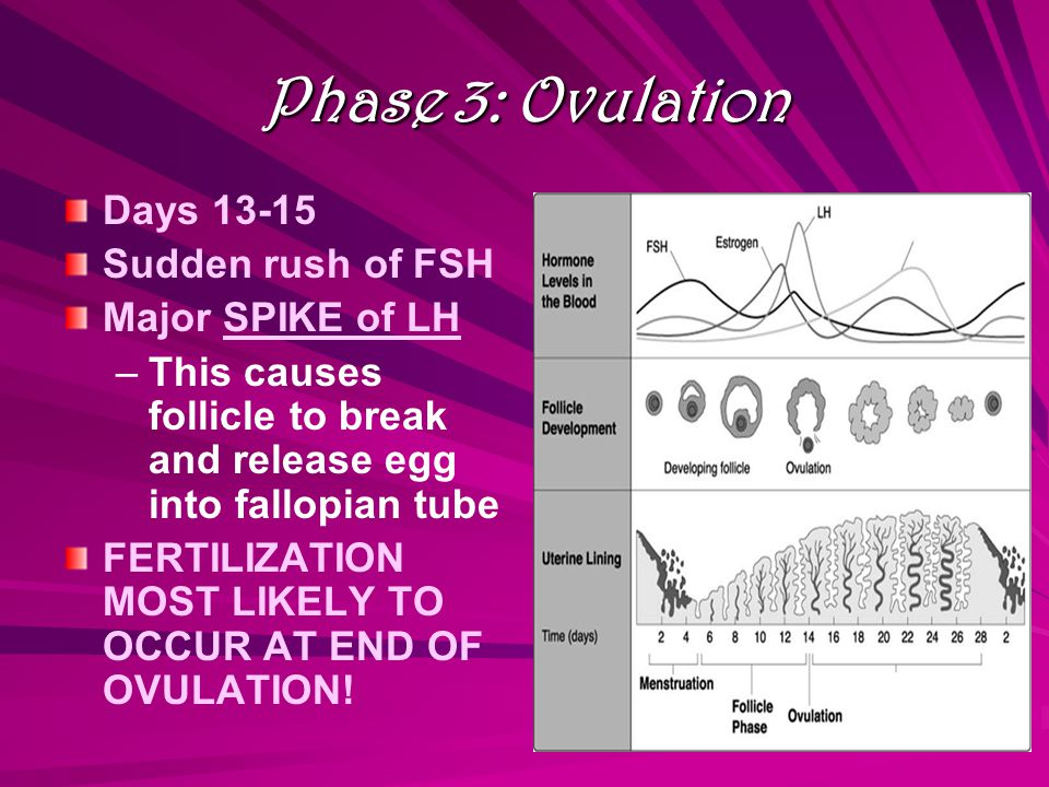 Phase 4: Luteal Phase Days 15-28 LH and FSH levels crash Corpus luteum forms from broken follicle Corpus luteum secretes estrogen and progesterone ––T––This thickens uterine lining to prepare for egg