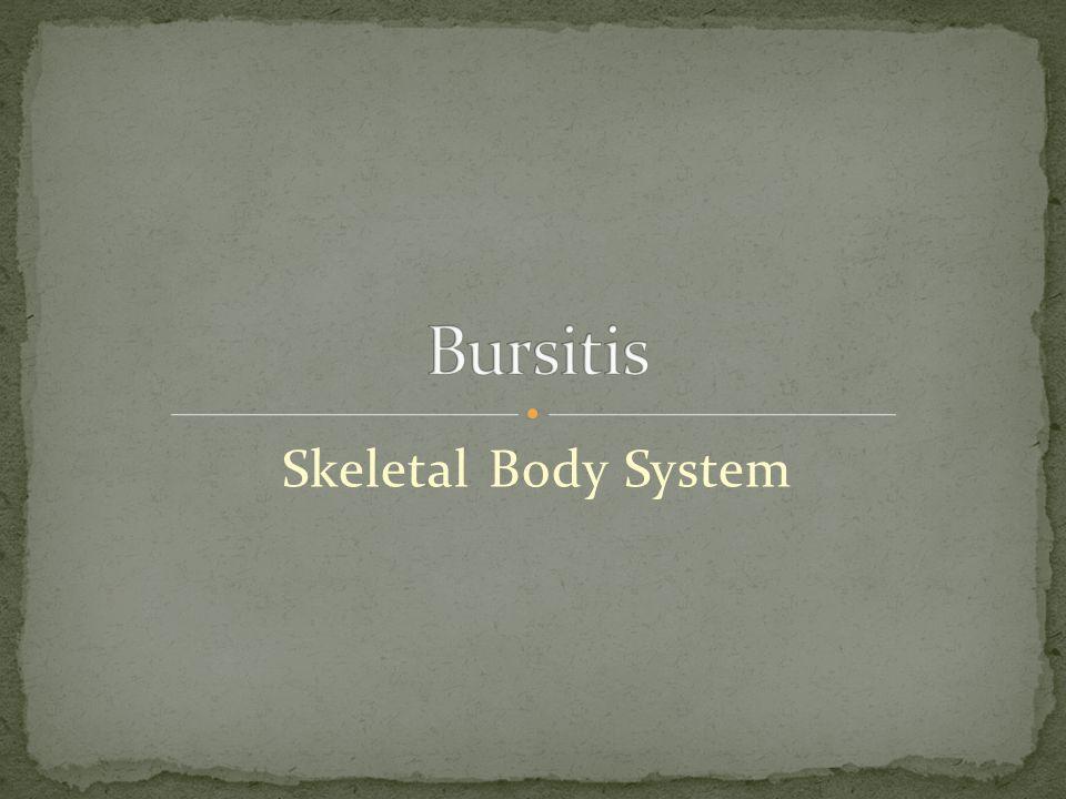 Skeletal Body System