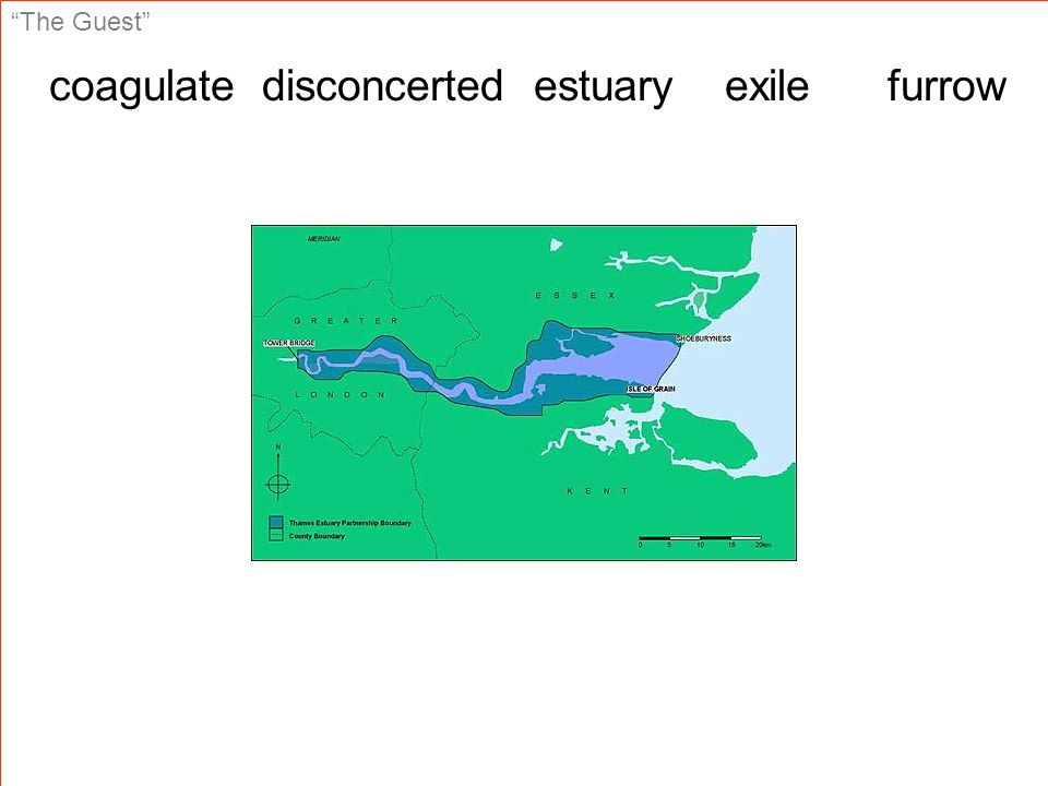 The Guest coagulate disconcerted estuary exile furrow