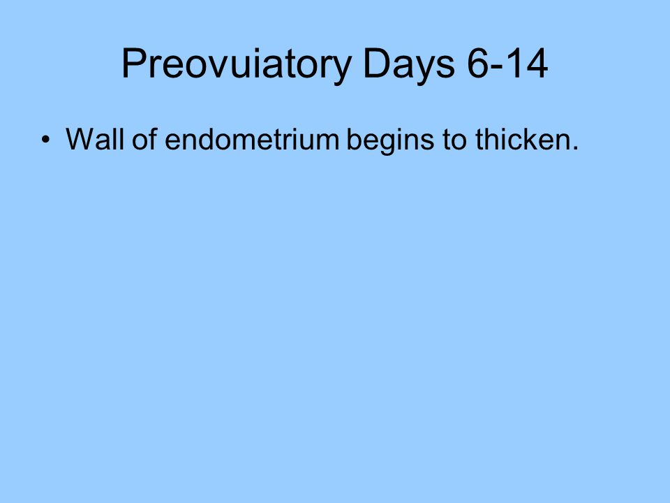 Preovuiatory Days 6-14 Wall of endometrium begins to thicken.