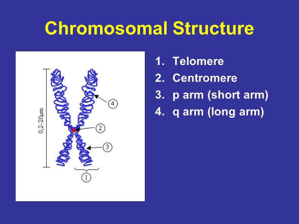Chromosomal Structure 1.Telomere 2.Centromere 3.p arm (short arm) 4.q arm (long arm)