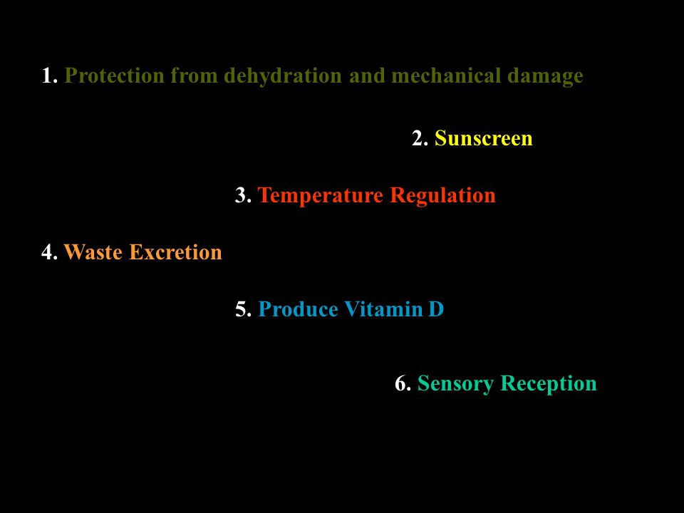 1. Protection from dehydration and mechanical damage 2. Sunscreen 3. Temperature Regulation 4. Waste Excretion 5. Produce Vitamin D 6. Sensory Recepti