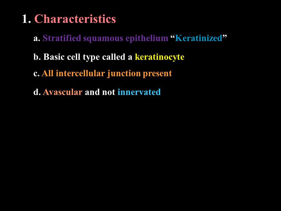 "1. Characteristics a. Stratified squamous epithelium ""Keratinized"" b. Basic cell type called a keratinocyte c. All intercellular junction present d. A"