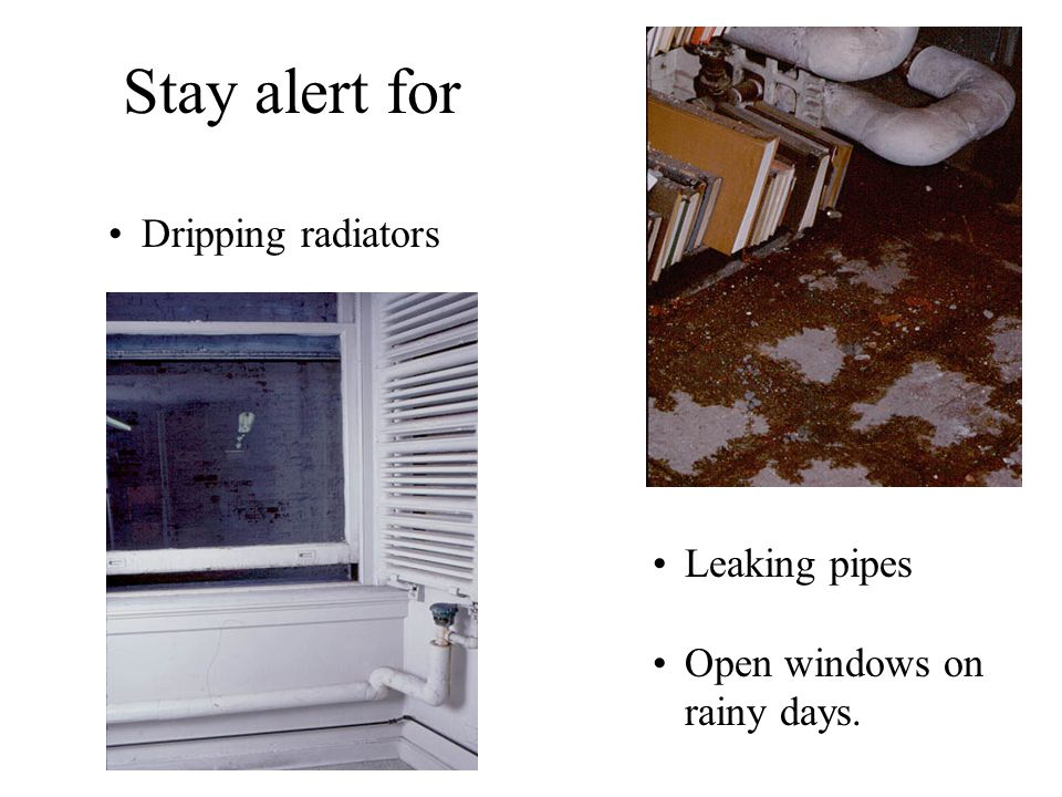 Stay alert for Dripping radiators Leaking pipes Open windows on rainy days.