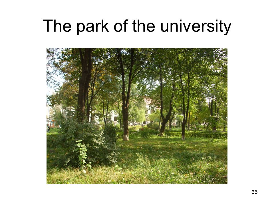 65 The park of the university